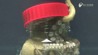 The Amazing Ability Of The Octopus - Just Watch!