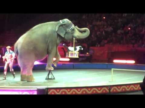 HD Circus