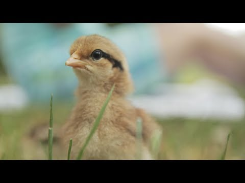 Cute video small animals
