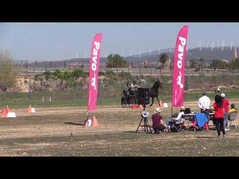 I Fase Cto Navarro Enganches Obstáculos 240319 Video 7