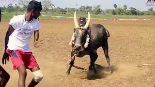 Jallikattu best momentshttp://vandikaranraj.blogspot.in/https://www.facebook.com/Vandikaranhttps://twitter.com/vandikaran1