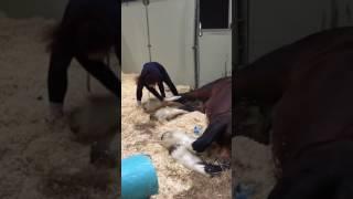 animale calul somnoros
