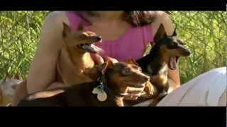 DOGS 101: Miniature Pinscher