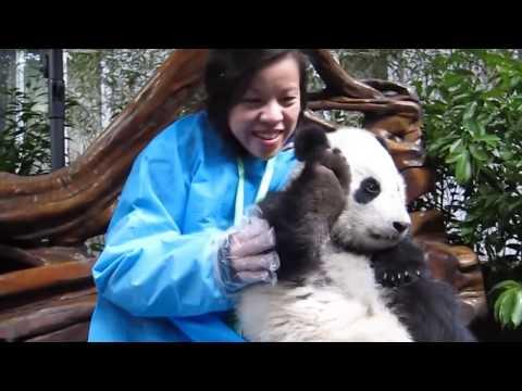 15 Милых Животных, Которые Могут Убить Тебя (видео)