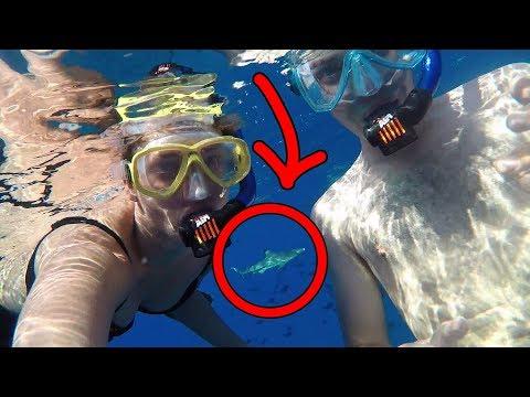 Sharks ate us lol (JackAsk #86)