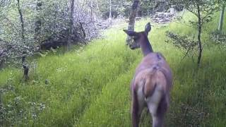 <h5>Trail Cam May-June 2016</h5>