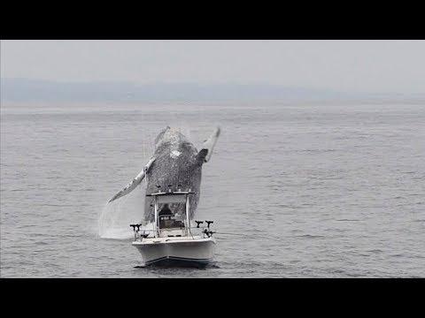 Φάλαινα αναδύεται δίπλα σε βάρκα ψαρά