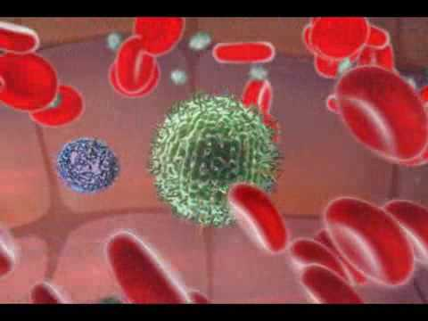 An Animation Demonstrating the Role of Natural Killer Cells
