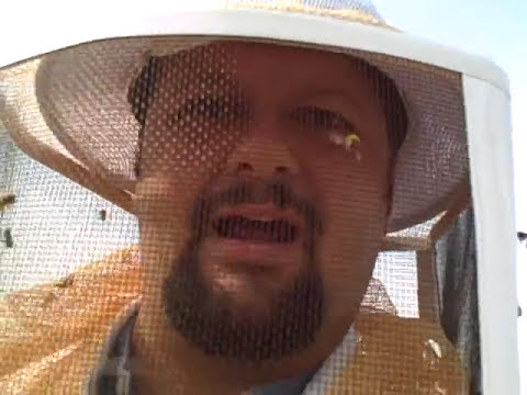When Killer Bees (Africanized Honey Bees) Attack