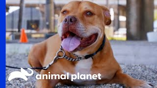 Krunch Says Goodbye To Villalobos After Over 7 Years! | Pit Bulls & Parolees by Animal Planet