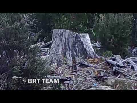'Definitely a tiger, too big for a quoll' says BRT team who took Tassie Tiger video