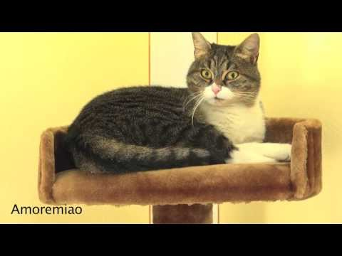 gatto spaventato dai suoi miagolii!