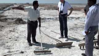 Tuticorin India  city photos : Salt harvesting in Tuticorin, India