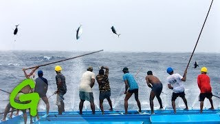 Catching Tuna Maldivian Style Short Documentary Video