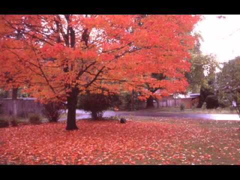 Autumn Leaves Greg Caldarone online metal music video by GREG CALDARONE