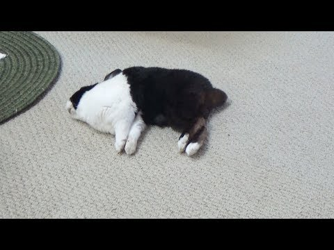 Sleeping Rabbit has Accident