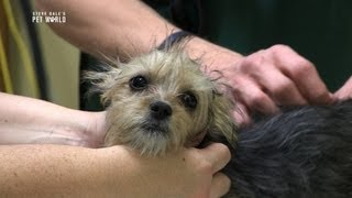 Steve Dale: Preventive Care for Our Pets
