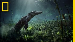 Video Meet the Residents of Everglades National Park | America's National Parks MP3, 3GP, MP4, WEBM, AVI, FLV Oktober 2018