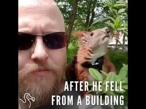 Tanskalaismies pelastaa hylätyn ja haavoittuneen oravavauvan ja saa siitä pirteän ystävän