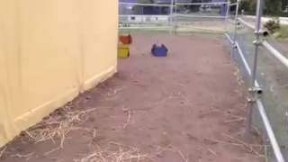 Baby Ostrich Race Car