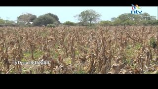 Kilifi Kenya  city images : Drought in Kilifi takes a toll on the residents