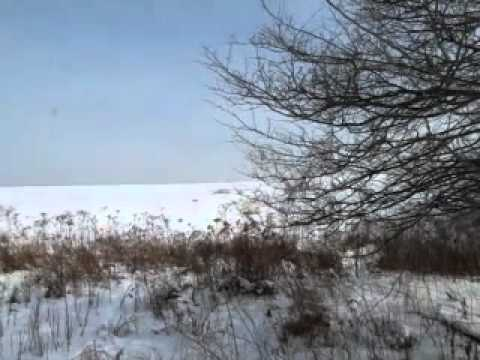 SHED ANTLER HUNTING: tip and hints to find Whitetail naturally shed an