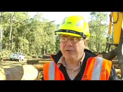 Forestry workers improving workplace safety