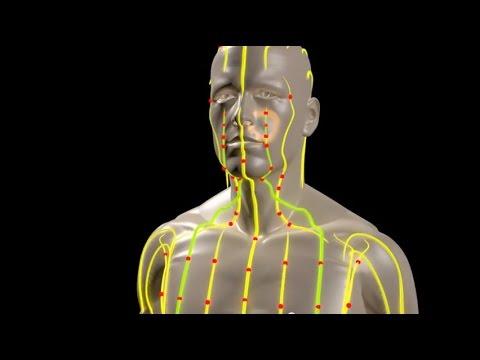meridiani energetici di agopuntura - il loro cammino