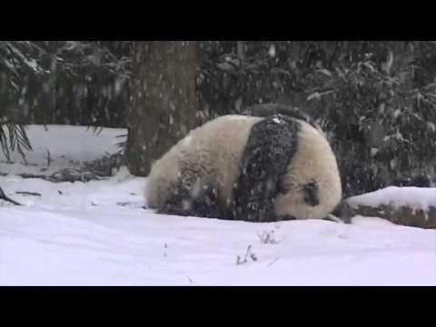 Speel Sneeuwpret voor pandabeer af