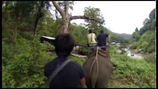 Chiang Mai Elephant Riding Thailand