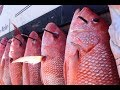Video for pisces charters panama city capt mike