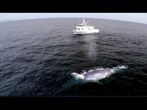 Blue Whale Appears On Nature Show At Perfect Time