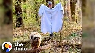 Fallen Baby Owl Rescued by Family   The Dodo by The Dodo