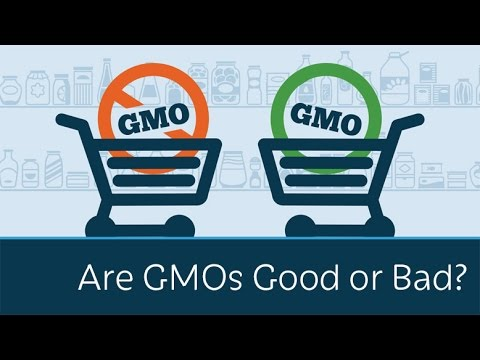GMO, the good, the bad, and the ugly?
