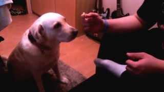 Pies nie je od Kaczyńskiego i Rydzyka :D
