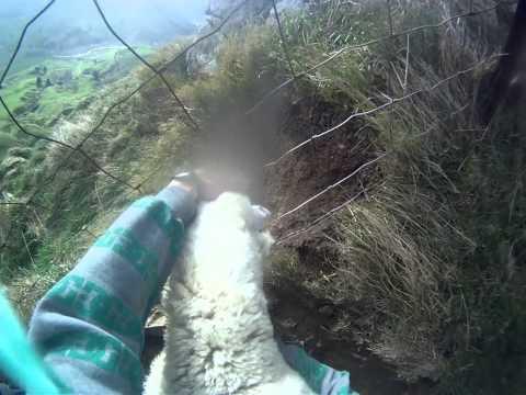 這男子花了2分鐘時間解救「受困小綿羊」,沒想到最後的畫面令大家都忍不住笑噴了!