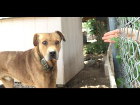 這隻被鐵鍊拴住10多年的狗狗每天都對路人吠叫呼救,快要絕望放棄時…有人停下了腳步!