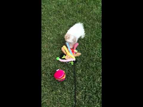 Jack playing in yard