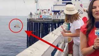 Video Awalnya Senang Bisa Melepaskan Anjing Laut ke Laut Bebas, tapi peristiwa aneh selanjutnya.... MP3, 3GP, MP4, WEBM, AVI, FLV Mei 2017