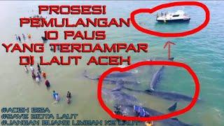Video PERTANDA APA?? - sampai gerombolan ikan paus muncul ke perairan Aceh MP3, 3GP, MP4, WEBM, AVI, FLV November 2017