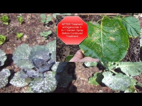 Update On Emergency Vegetable Crisis 5.31.2013