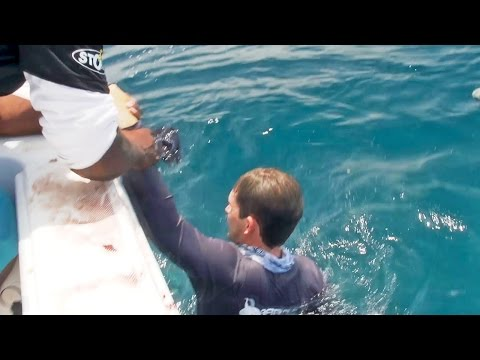 fisherman - It became clear to Josh how dangerous extreme fishing really is when a giant fish pulled him over the boat. Johan caught a bonito and Josh quickly threw it out for bait. There were 5 big bull...