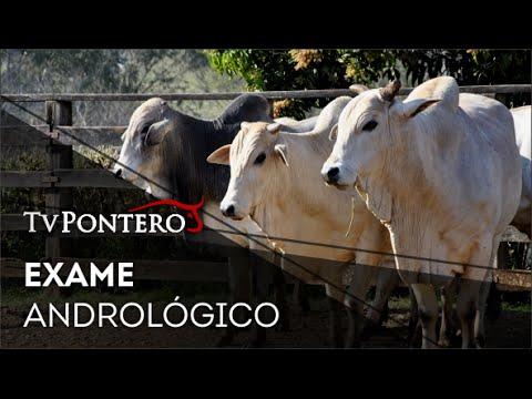 TV Pontero | Exame Andrológico • Ribeirão do Pinhal/PR