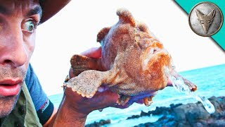 Download Youtube: MONSTER FROGFISH FOUND!