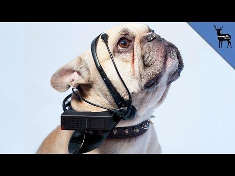 Kay Rich: Dog Translator of The Future