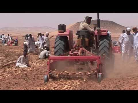 الزراعة مورد السودان الحقيقي