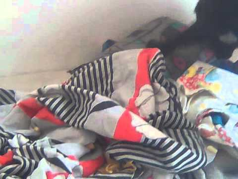 סקס עים חיות - כלב חרמן שהחליט שהוא מעדייף לזיין כרית.