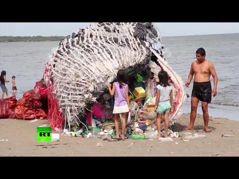 菲律賓海灘驚險巨大鯨魚屍體民眾嚇壞,走進一看...所有人都沉默了!