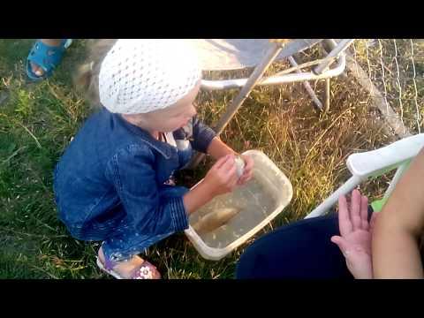 """""""Мій шалений день"""": Дашуля (3 роки 8 місяців)"""