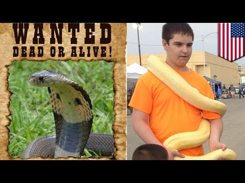 Pet store worker 'killed by monocled cobra' which is now on the loose in Austin - TomoNews